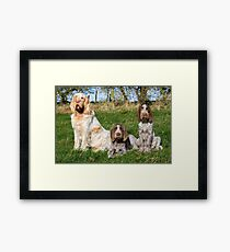 Italian Spinoni Orange and White Adult with Brown Roan Puppies Portrait Framed Print