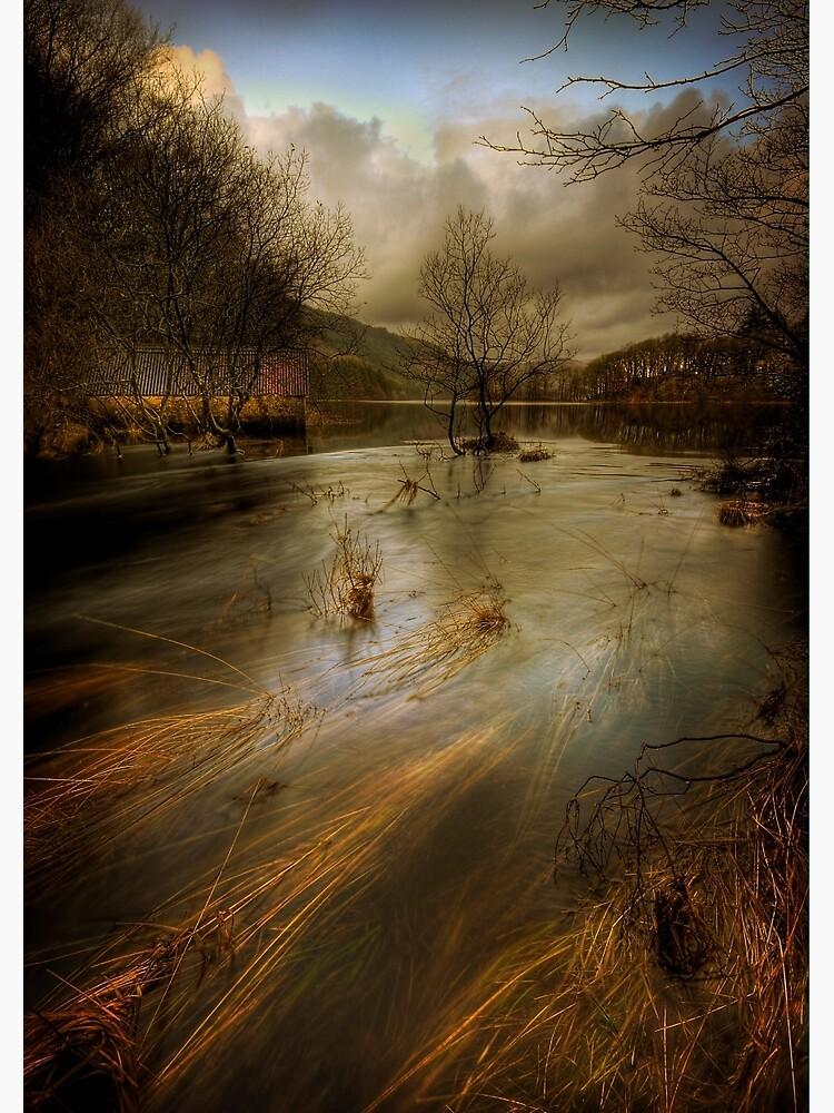 Chon Flow by Shuggie