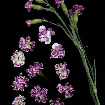 Carnation Drops Dark Floral by LindasPhotoArt