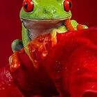 Red eyed tree frog on Red Lily by FrogtographerUK