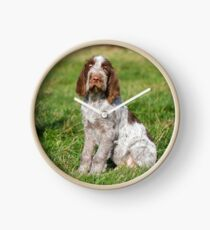 Brown Roan Italian Spinone Puppies Clock