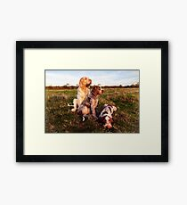 Italian Spinone Orange and White Adult with Brown Roan Puppies Portrait Framed Print