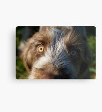 Brown Roan Italian Spinone Puppy Dog Head Shot Metal Print