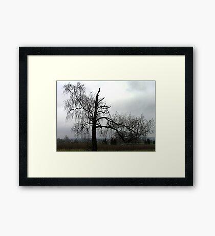 Long Life Framed Print