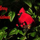 MERRY CHRISTMAS by RoseMarie747