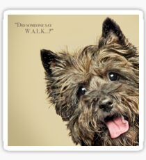 Curious and Cute Cairn Terrier Sticker