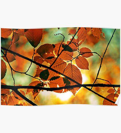 autumn,gold branch Poster