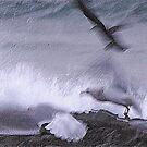 Flying Seagulls  by Klaus Bohn