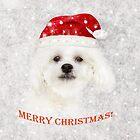 Christmas Maltese puppy by Zina Stromberg