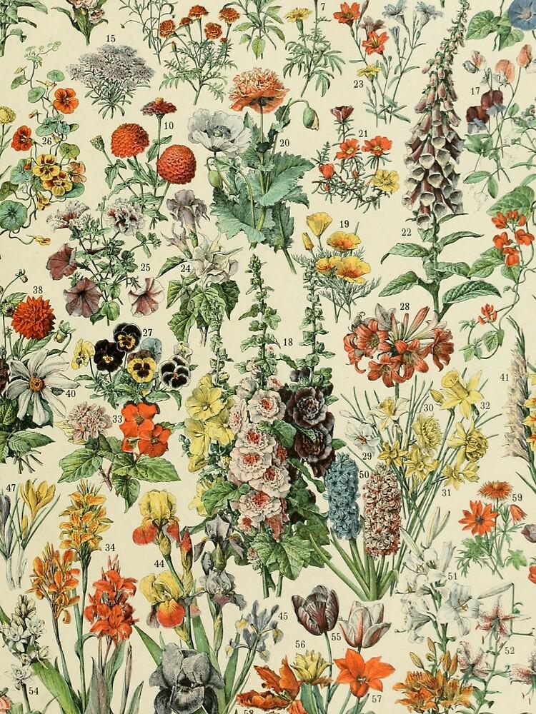 Adolphe Millot Fleurs A by historicalstuff