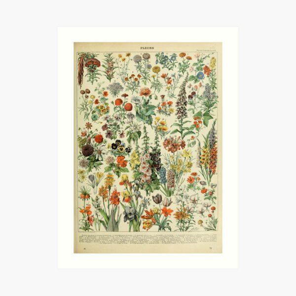 Country Apples Grapes Flowers Contemporary Wall Picture Honey Framed Art Print