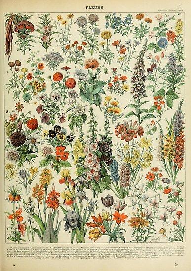 Adolphe Millot Fleurs A von historicalstuff