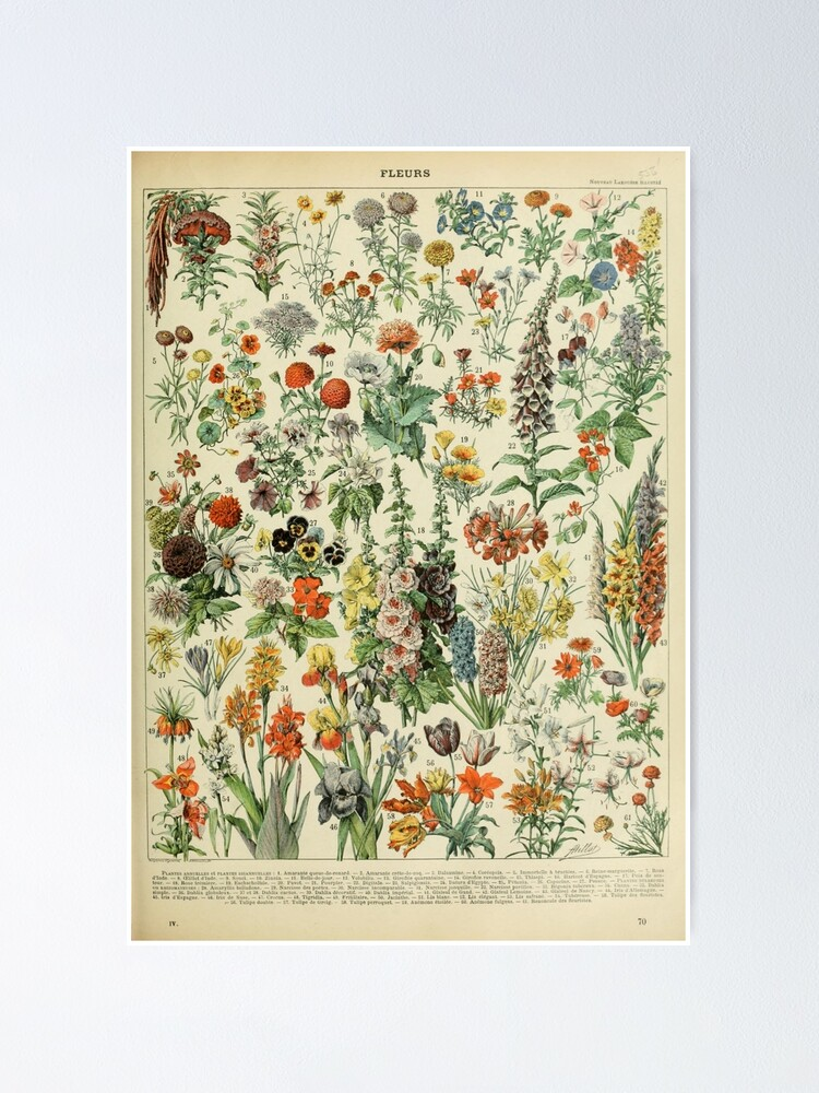 Alternate view of Adolphe Millot Fleurs A Poster