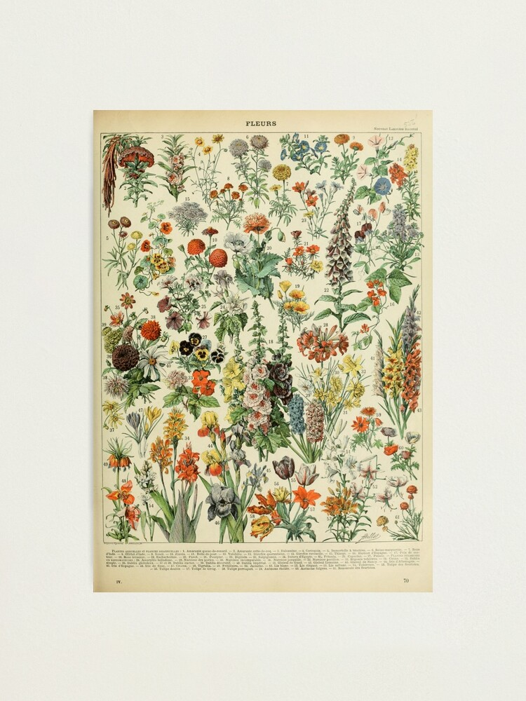 Alternate view of Adolphe Millot Fleurs A Photographic Print