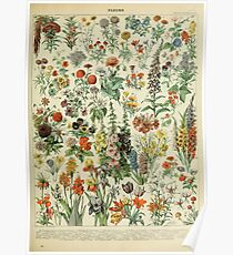Adolphe Millot Fleurs A Poster