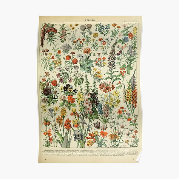 Adolphe Millot Fleurs A Poster