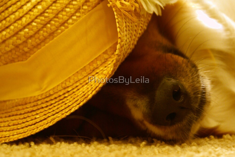 Mabel the Southern Belle by PhotosByLeila