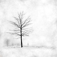 Snow Tree by Mary Ann Reilly