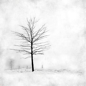 Snow Tree by reilly58