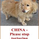 CHINA! Please stop eating and torturing dogs by Vaengi