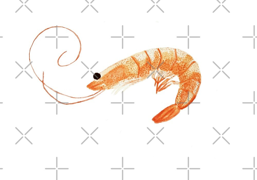 Shrimp watercolor