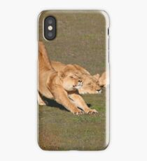 Sleepy Lionesses iPhone Case/Skin