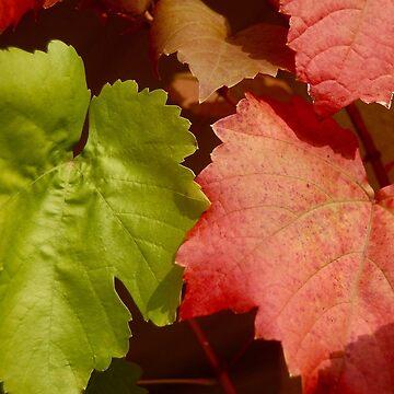 Crimson Glory vine by JackBridges