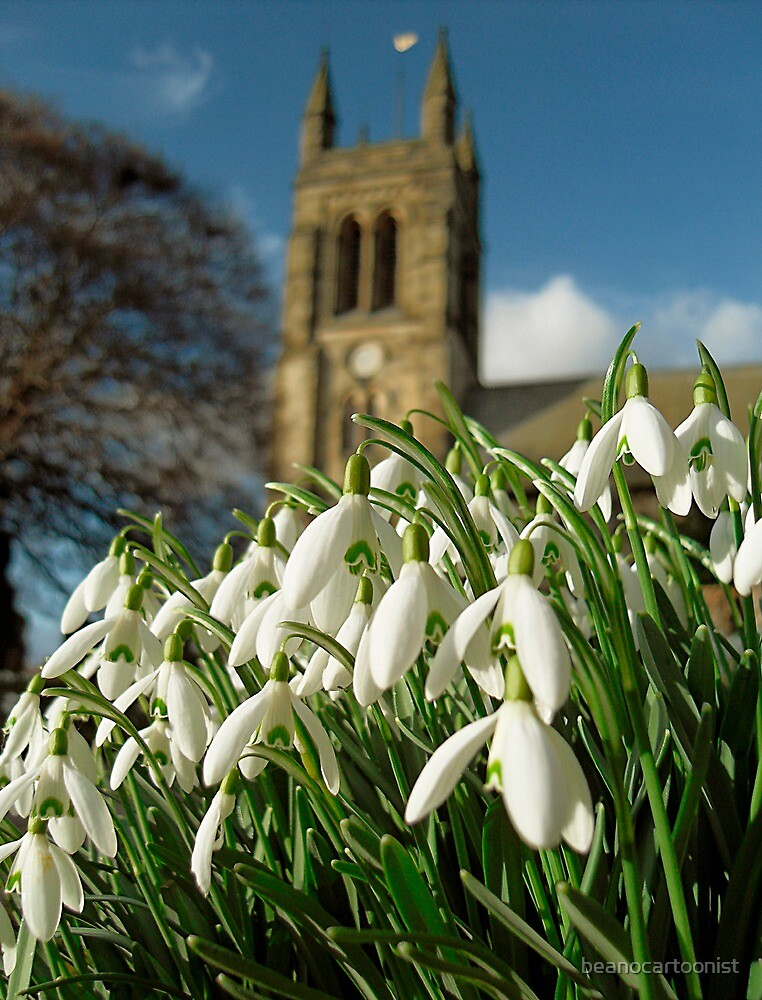 Snowdrops in Helmsley by beanocartoonist