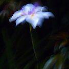 Butterfly Grass ... by Angelika  Vogel