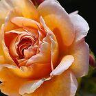 Rich Rose With My Ladybird Friend by Joy Watson