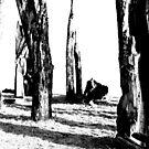 dark forest by Denny Stoekenbroek