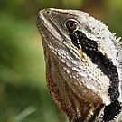 Australian Water Dragon by Lawrie McConnell