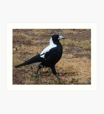 Strutting Art Print