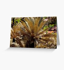 Cycads after a fire, Litchfield Greeting Card