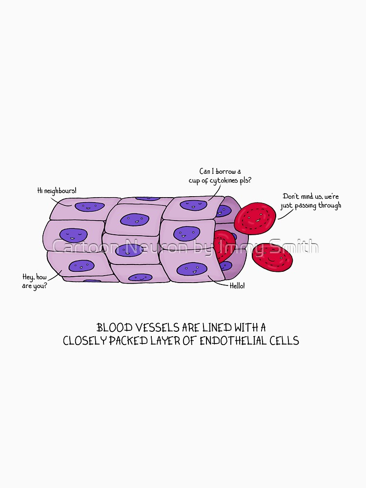 Blood vessel endothelium by Immy