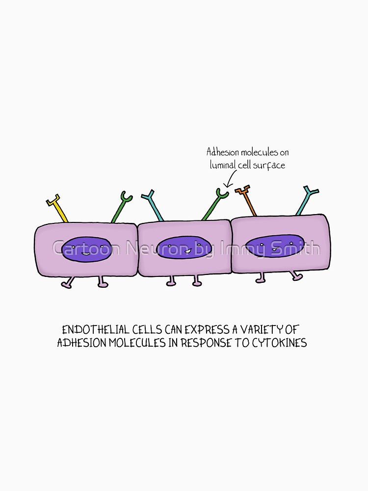 Endothelial cells waving by Immy