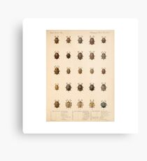 Vintage Insect Science Poster Metal Print