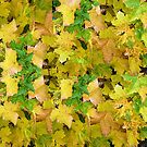 Yellow Maple leaves by Woodie