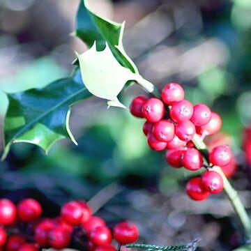 festive Christmas holly by DlmtleArt