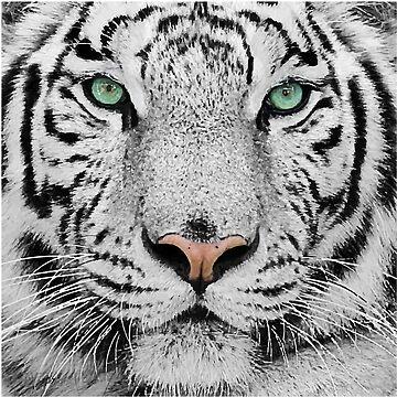 Amazing White Tiger Face by Adik