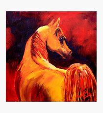 Arab Horse in Profile Photographic Print