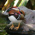 Colorful Quacker by Dana Yoachum
