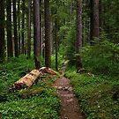 Forest Trail by rdshaw