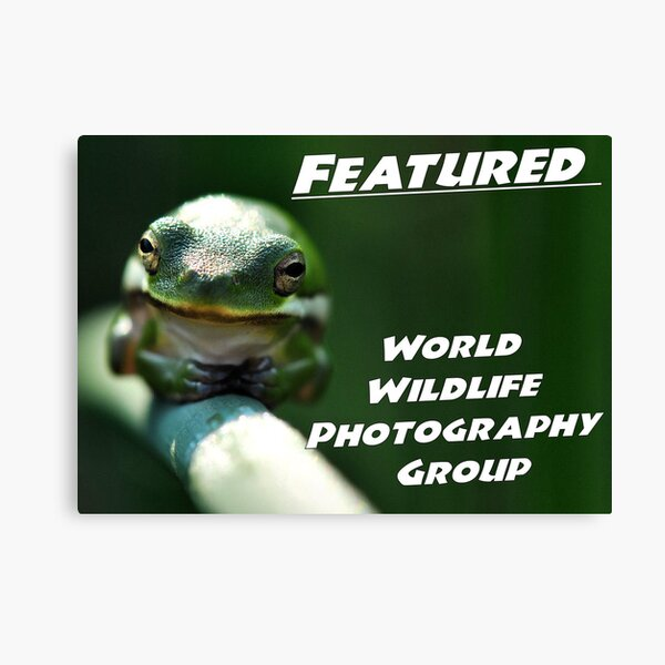 WWP Featured Canvas Print