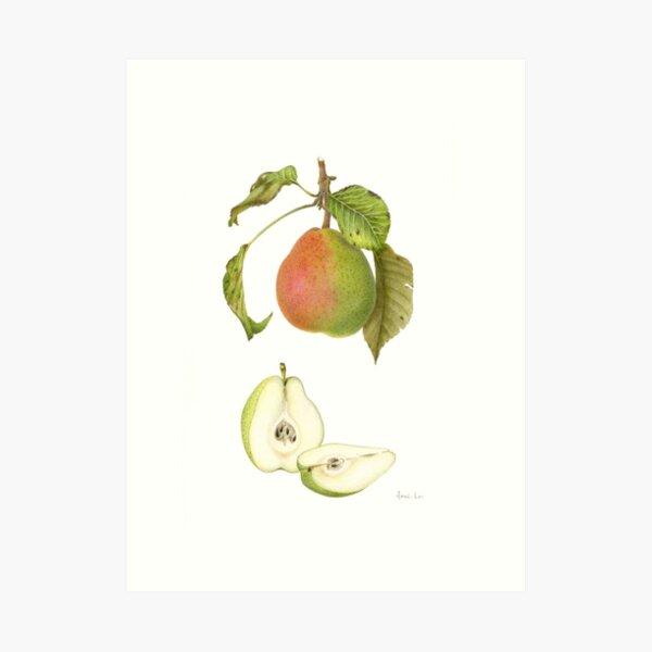 Forelle Pear Art Print