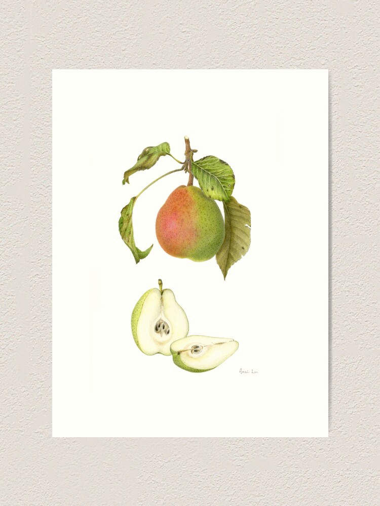 Alternate view of Forelle Pear Art Print