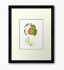 Forelle Pear Framed Print