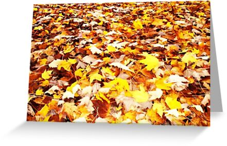 autumn leaves by Erica Sprouse