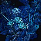 Hydrangea and Horseradish Leaves, Floral Art Black Blue by clipsocallipso