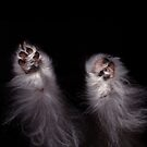 Cookie Dough Paws by Kim  kimkWIDMARK